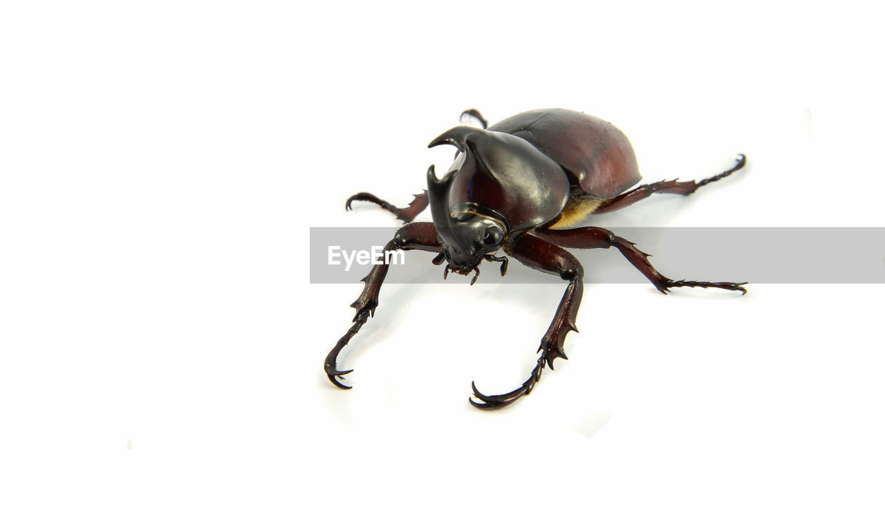 white background, studio shot, close-up, copy space, indoors, no people, animal, animal wildlife, still life, animal themes, one animal, cut out, invertebrate, freshness, raw food, high angle view, food and drink, food, nature, insect
