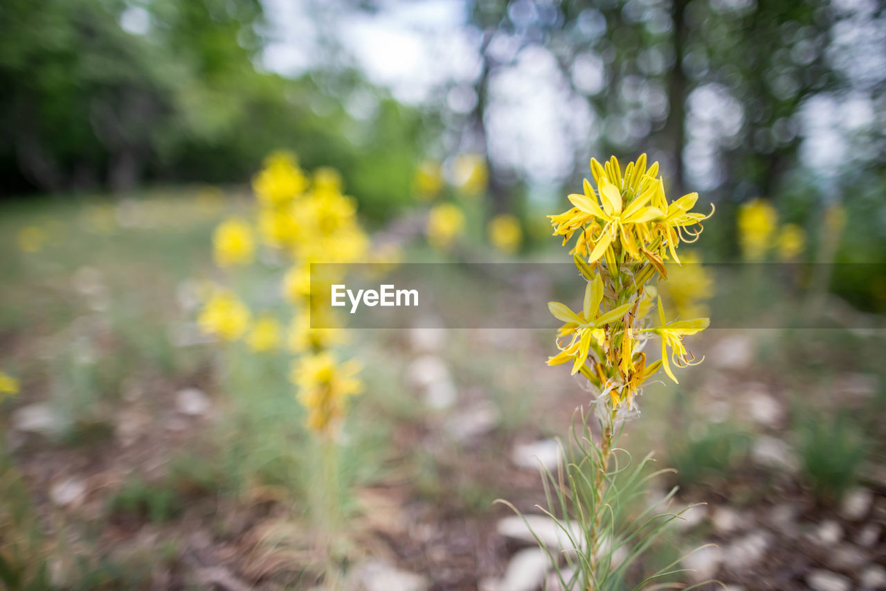 flower, plant, flowering plant, yellow, beauty in nature, growth, fragility, vulnerability, freshness, land, nature, close-up, field, day, selective focus, no people, petal, focus on foreground, flower head, inflorescence, outdoors