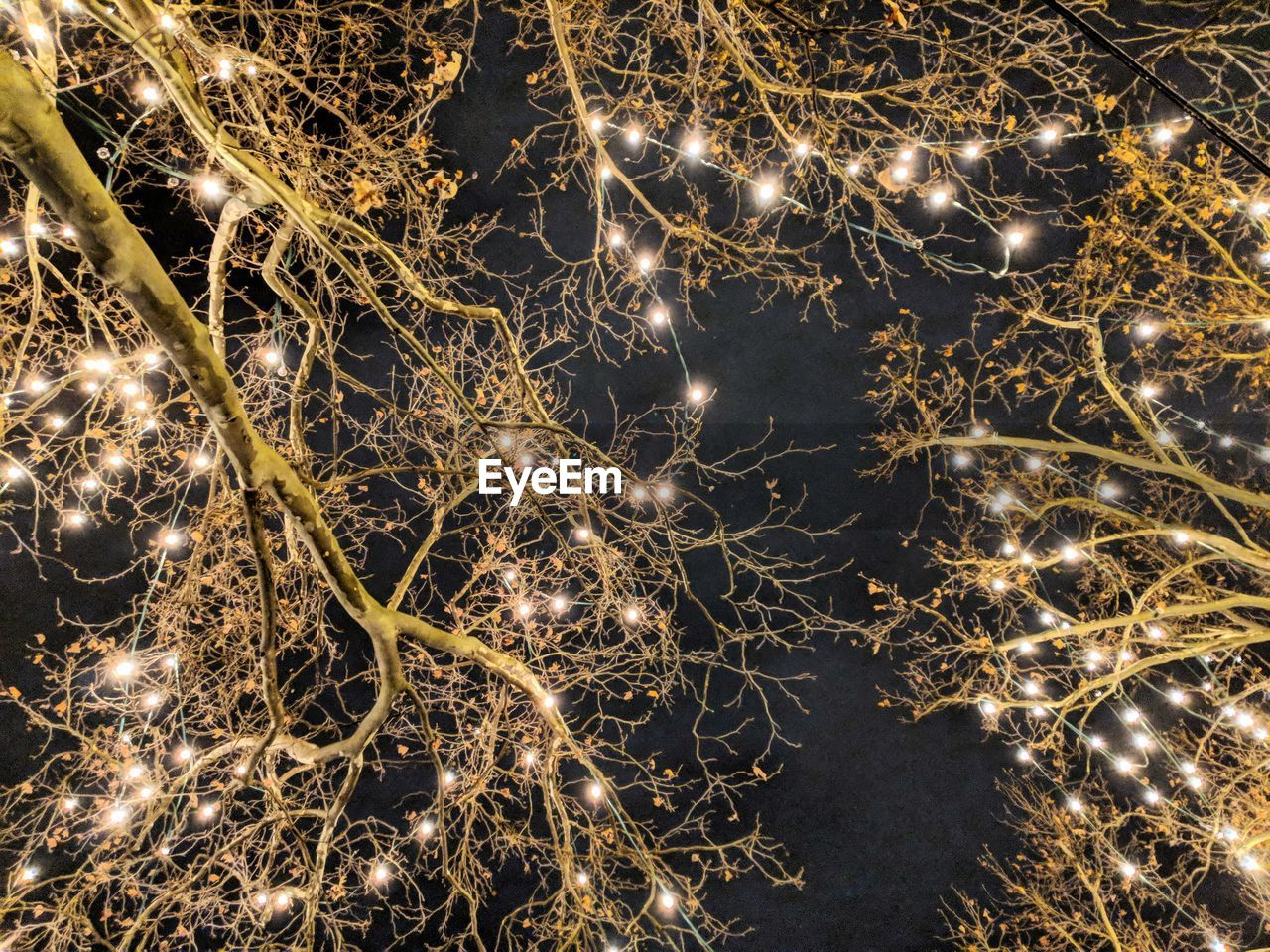 Low angle view of illuminated lights on tree during christmas at night