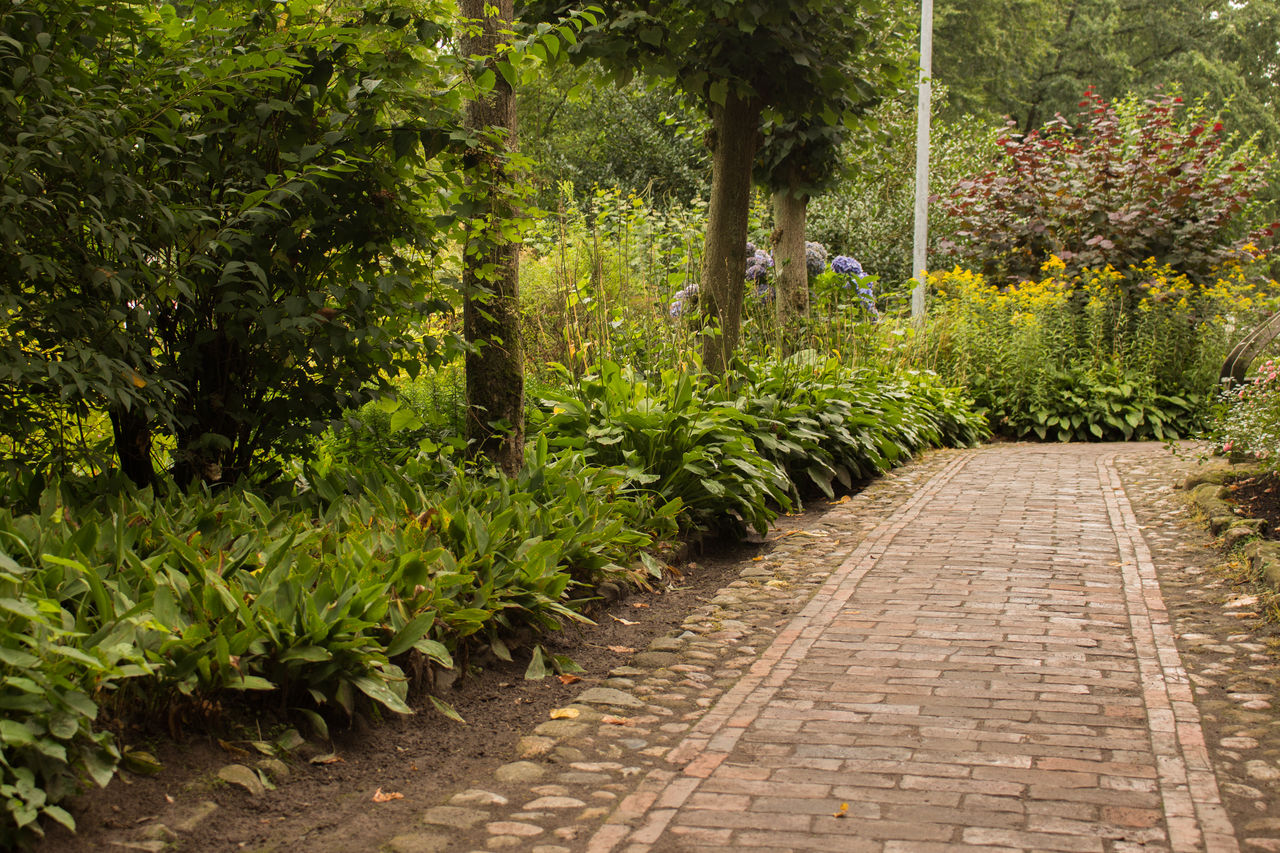 plant, tree, footpath, growth, nature, direction, day, outdoors, lush foliage, beauty in nature, foliage, the way forward, park, full length, green color, sidewalk, park - man made space, garden path, paving stone, forest, ornamental garden, flowerbed