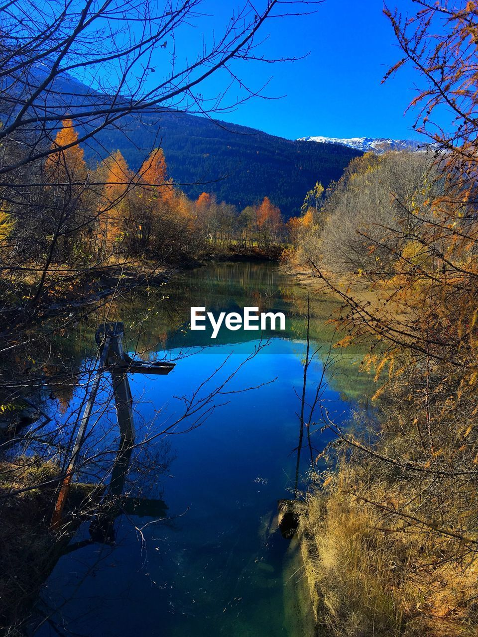 tree, nature, reflection, tranquility, tranquil scene, beauty in nature, no people, blue, scenics, lake, sky, outdoors, day, water, bare tree, growth, branch, autumn, mountain