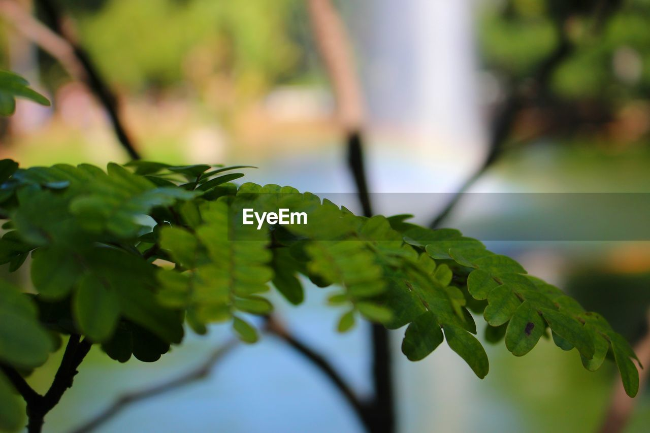 green color, growth, leaf, nature, focus on foreground, plant, close-up, beauty in nature, outdoors, day, no people, branch, tree, freshness, fragility