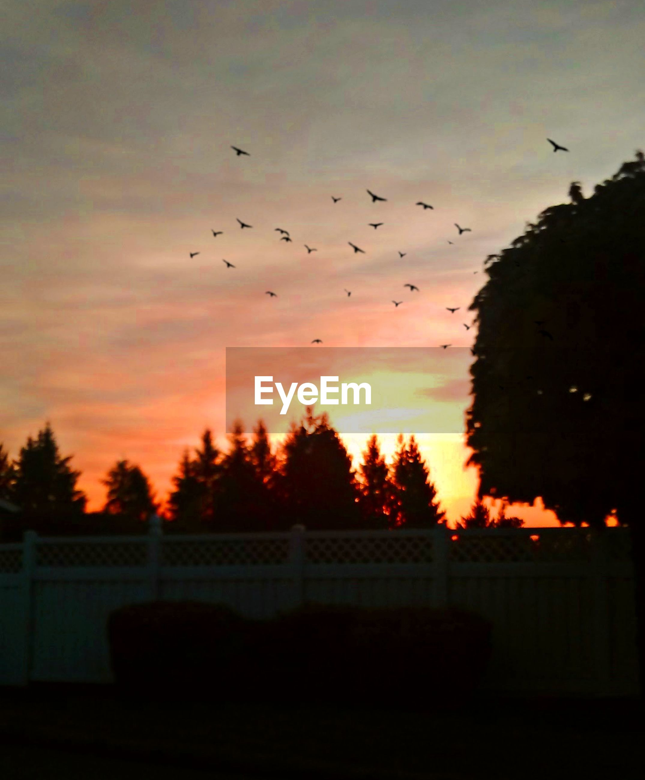 sky, bird, sunset, silhouette, animal themes, animal, large group of animals, vertebrate, flying, tree, cloud - sky, group of animals, animal wildlife, flock of birds, nature, animals in the wild, no people, plant, beauty in nature, orange color, ominous