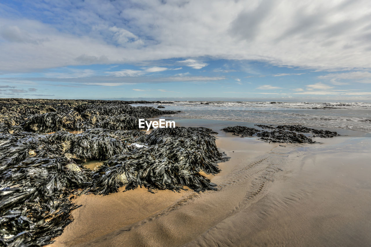 View Of Seaweed At Beach Against Cloudy Sky