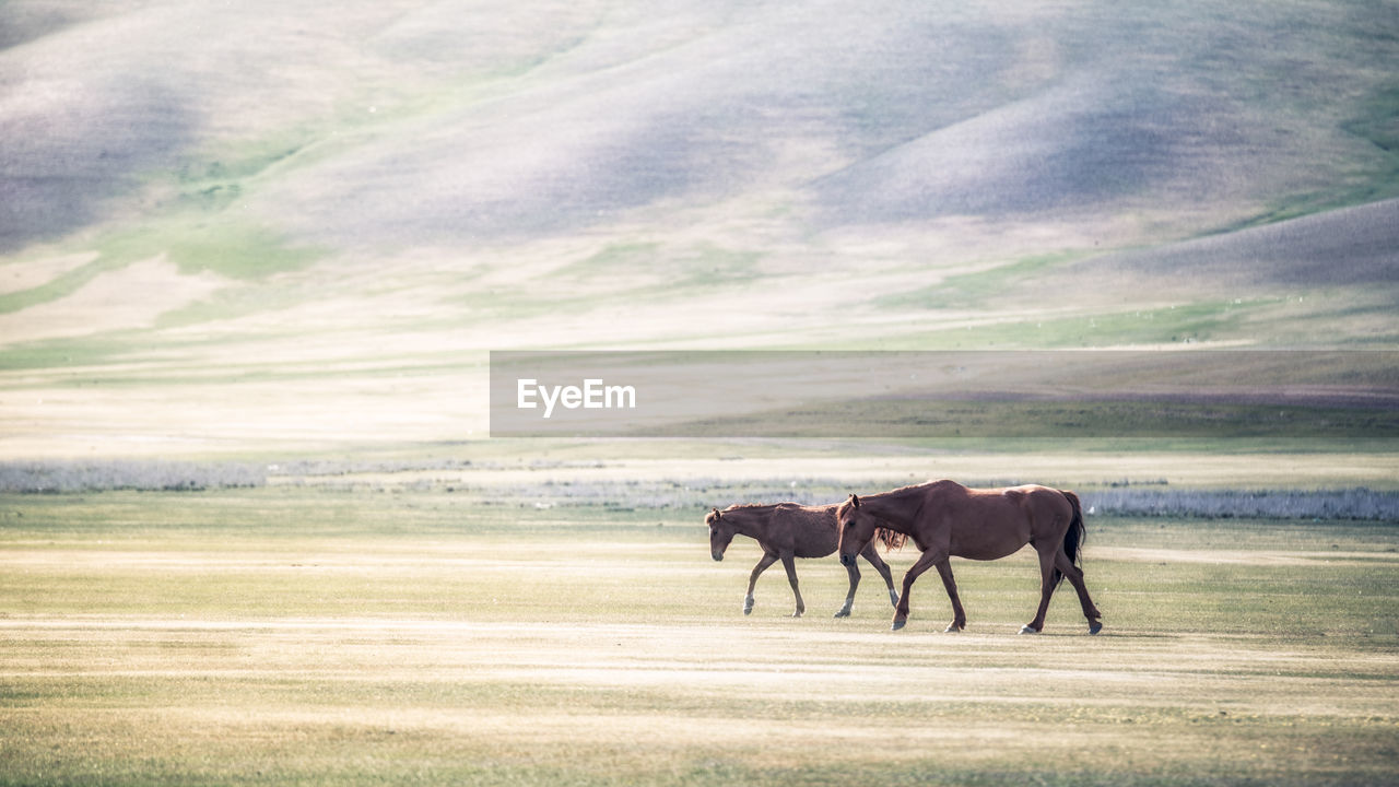 Horses walking on field against sky