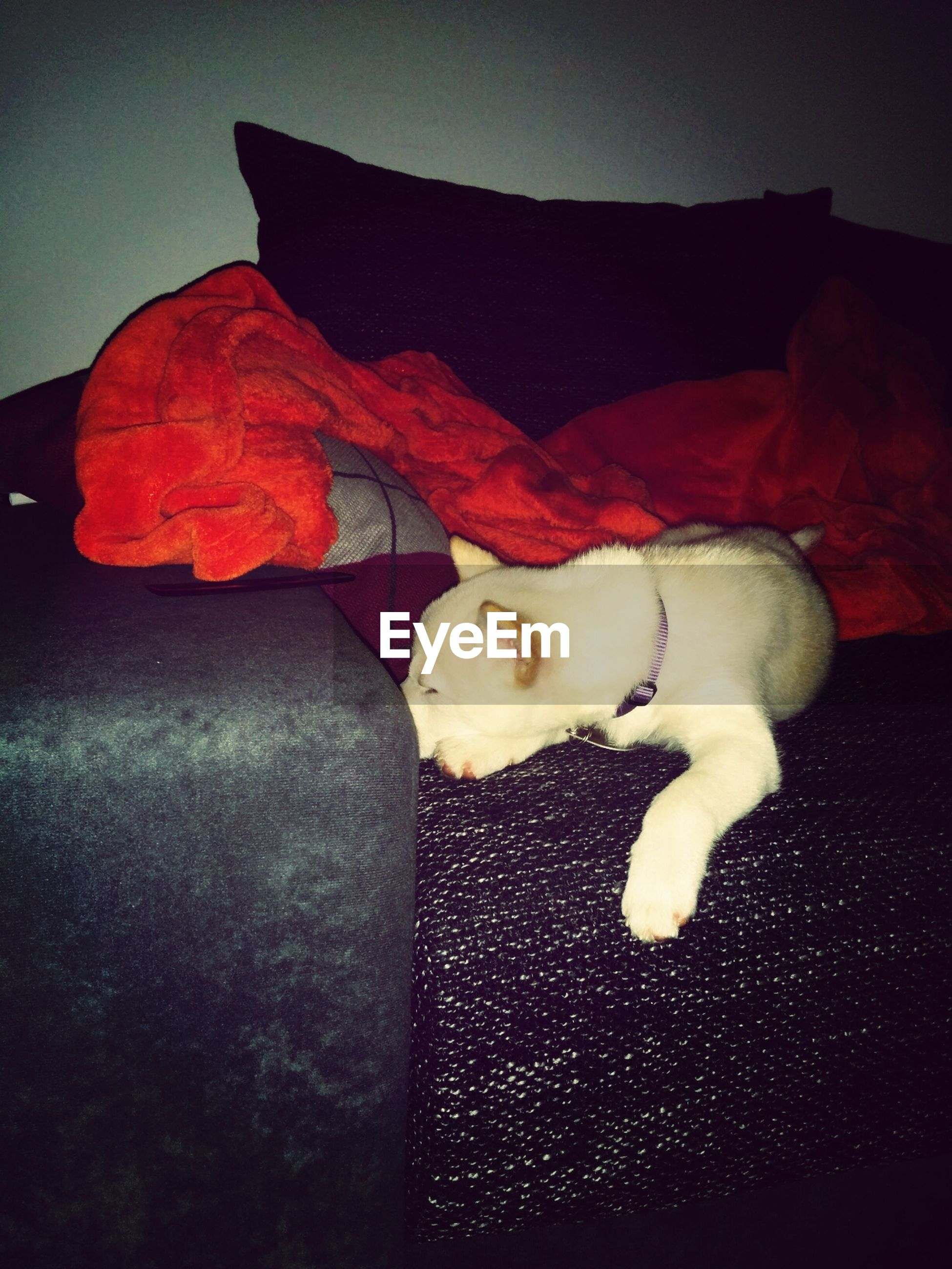 pets, domestic animals, relaxation, indoors, animal themes, domestic cat, one animal, lying down, mammal, resting, cat, sofa, sleeping, red, dog, comfortable, auto post production filter, full length, sitting, no people