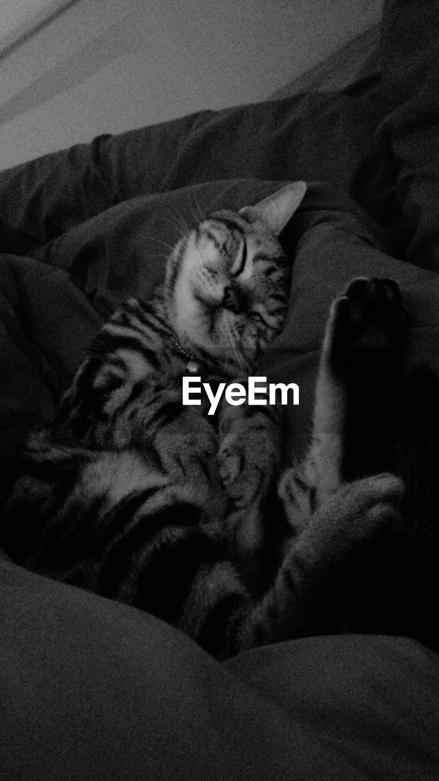indoors, relaxation, sleeping, animal themes, resting, bed, lying down, one animal, pets, mammal, domestic animals, domestic cat, home interior, sofa, high angle view, cat, eyes closed, blanket, no people, comfortable