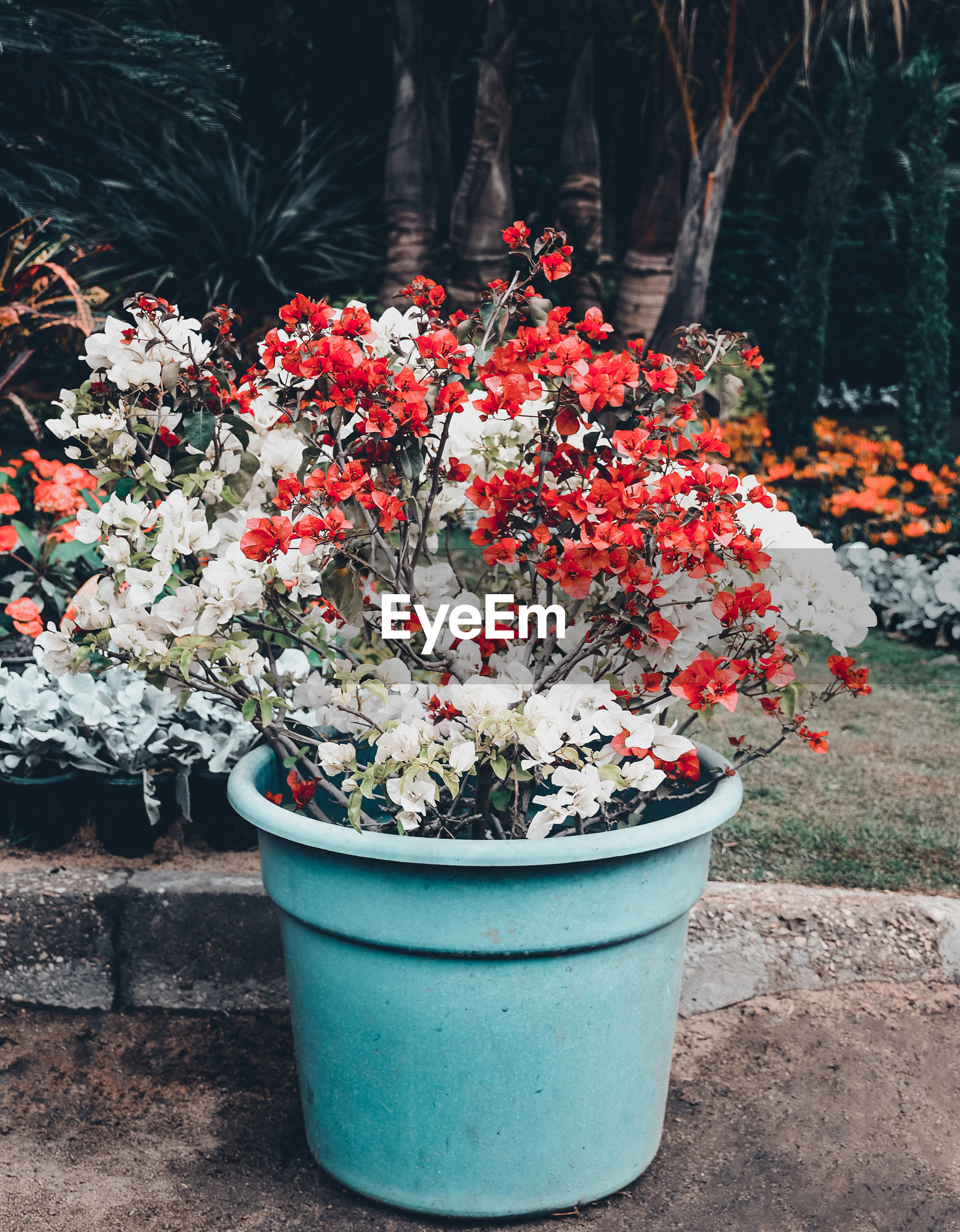 Potted flowering plants at garden