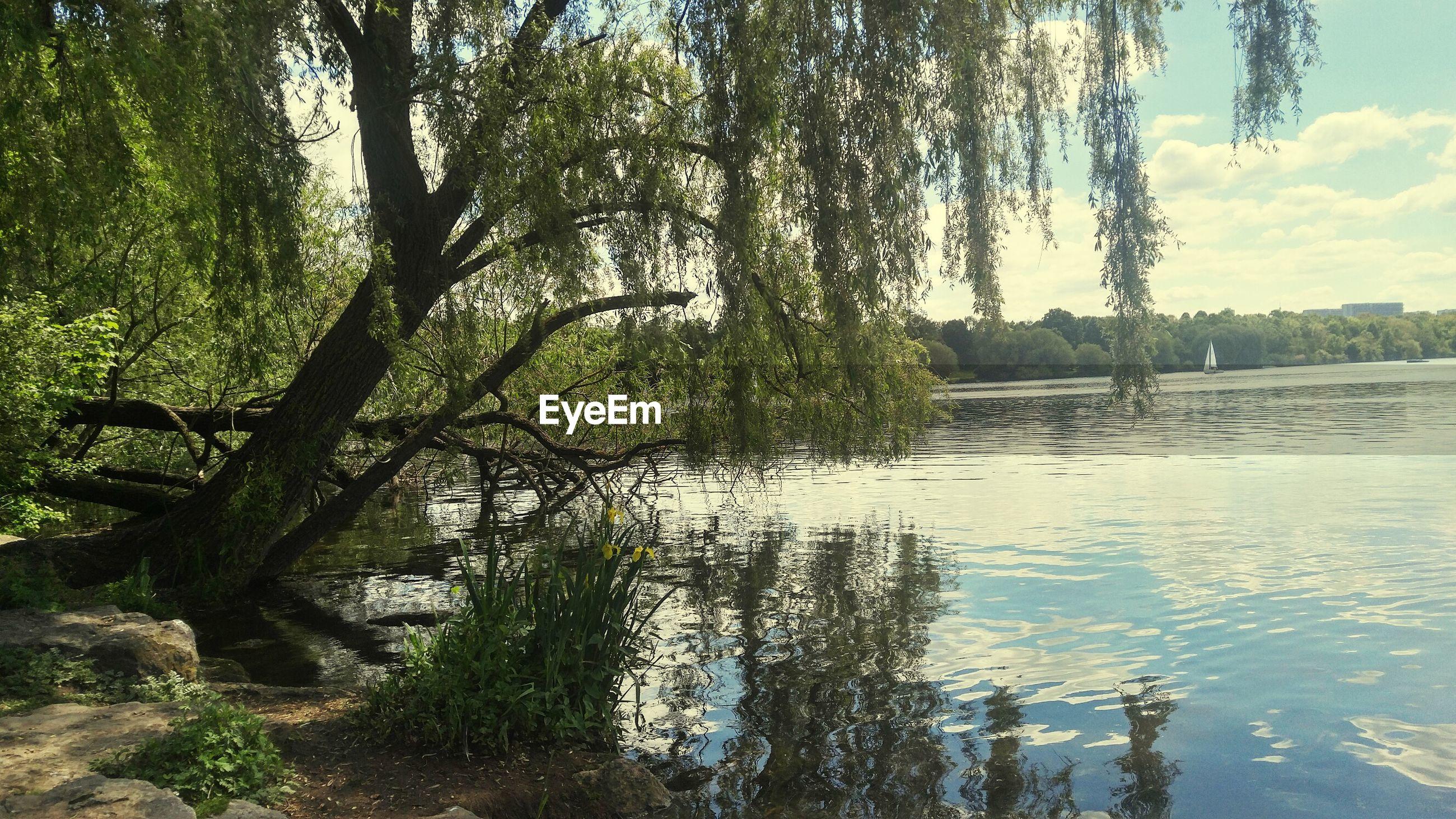 TREES GROWING IN LAKE AGAINST SKY
