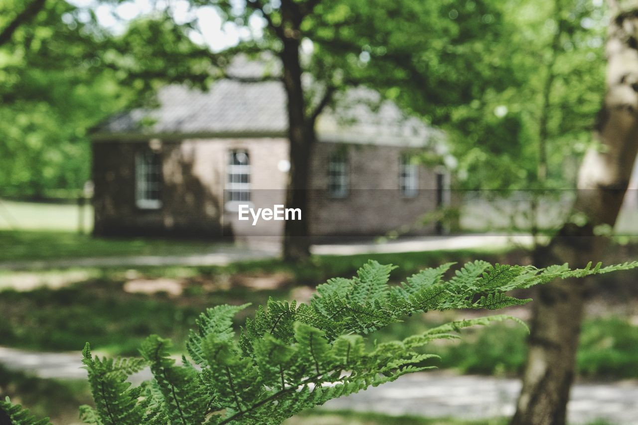 architecture, building exterior, built structure, house, focus on foreground, tree, green color, growth, day, outdoors, nature, no people, plant, beauty in nature, close-up, freshness
