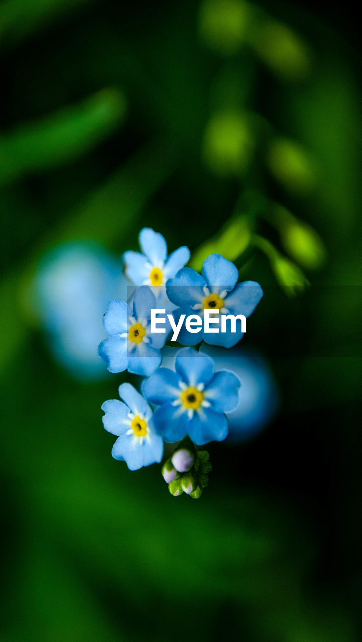 flower, nature, beauty in nature, fragility, growth, blossom, plant, petal, freshness, no people, close-up, outdoors, flower head, day