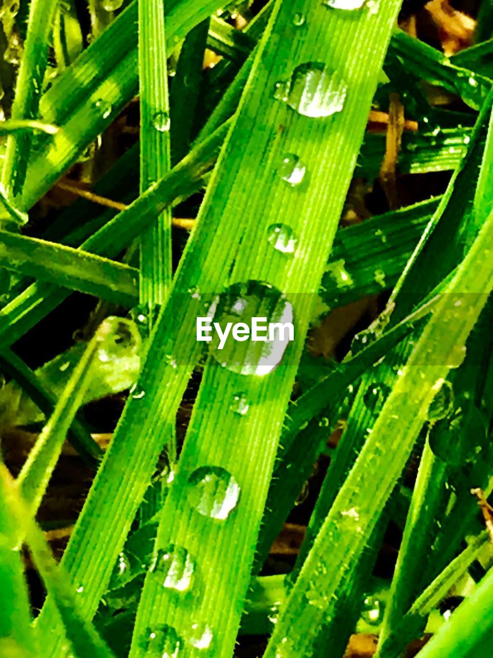 green color, growth, plant, water, drop, wet, grass, nature, leaf, close-up, plant part, blade of grass, freshness, beauty in nature, day, no people, full frame, dew, outdoors, rain, raindrop, rainy season, purity