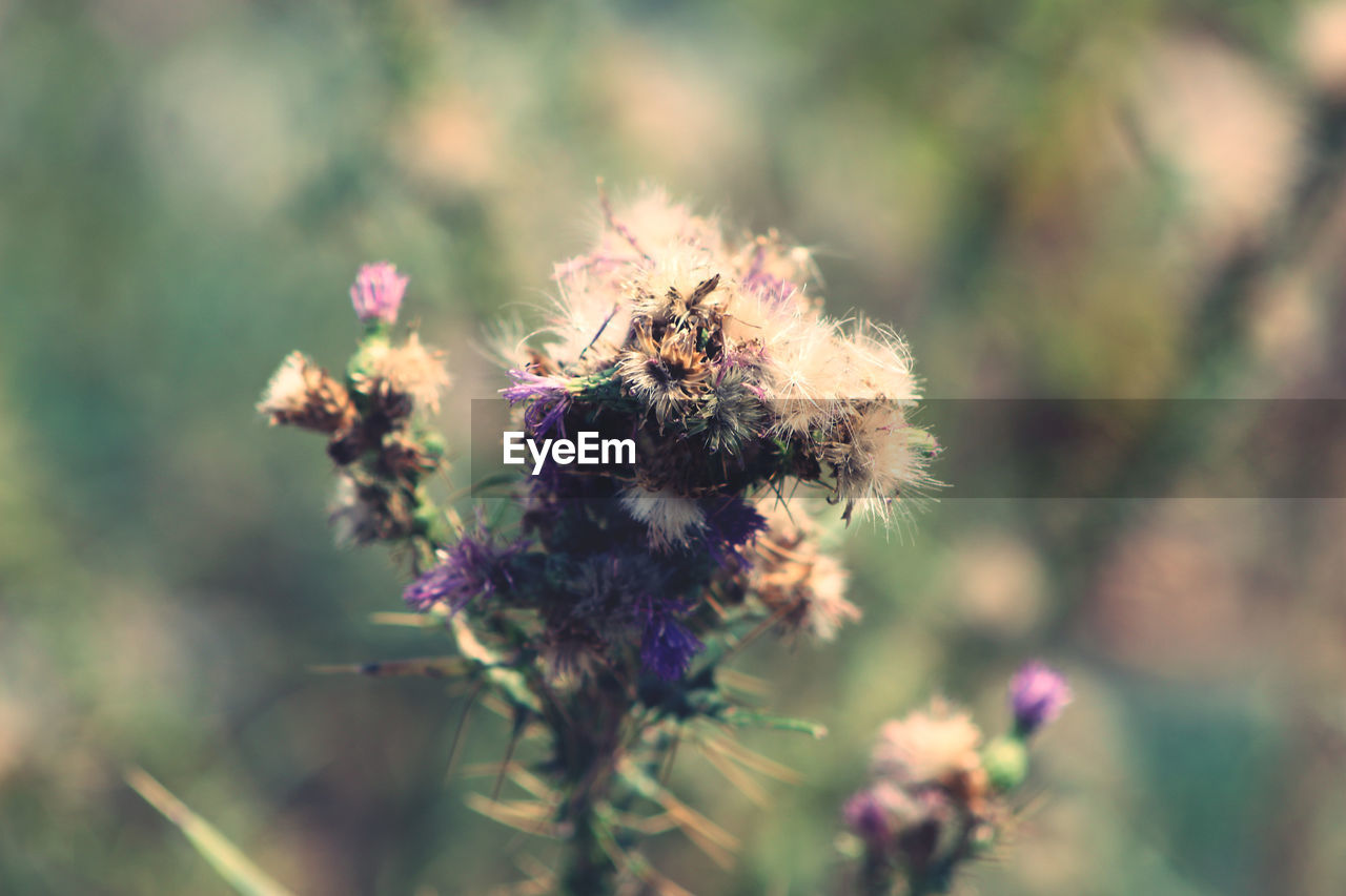 flowering plant, flower, plant, fragility, freshness, vulnerability, beauty in nature, close-up, growth, invertebrate, nature, day, one animal, no people, animals in the wild, insect, flower head, animal, animal wildlife, animal themes, pollination, outdoors, purple