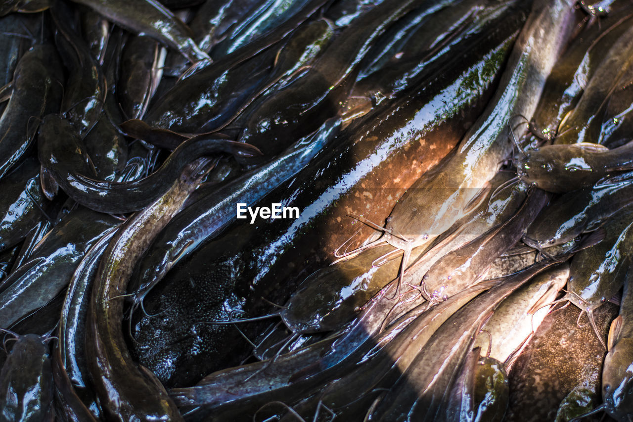 fish, seafood, food, food and drink, freshness, vertebrate, for sale, animal, retail, wellbeing, healthy eating, full frame, no people, close-up, high angle view, still life, market, raw food, backgrounds, fish market, ice, sale, outdoors, retail display, consumerism, fishing industry