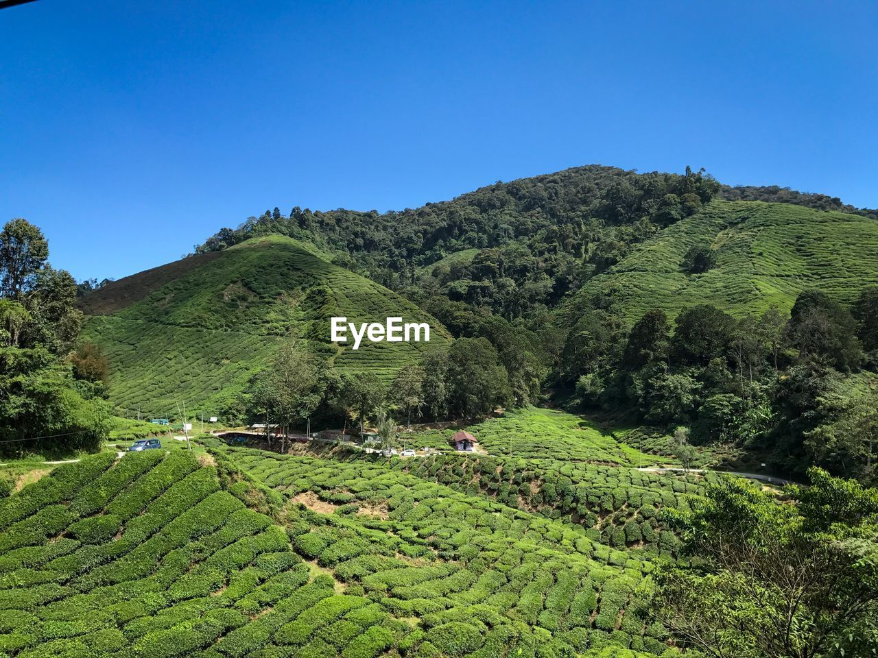 plant, tree, green color, growth, sky, scenics - nature, beauty in nature, tranquility, nature, tranquil scene, landscape, land, agriculture, mountain, clear sky, environment, day, field, foliage, lush foliage, no people, outdoors, tea crop, plantation