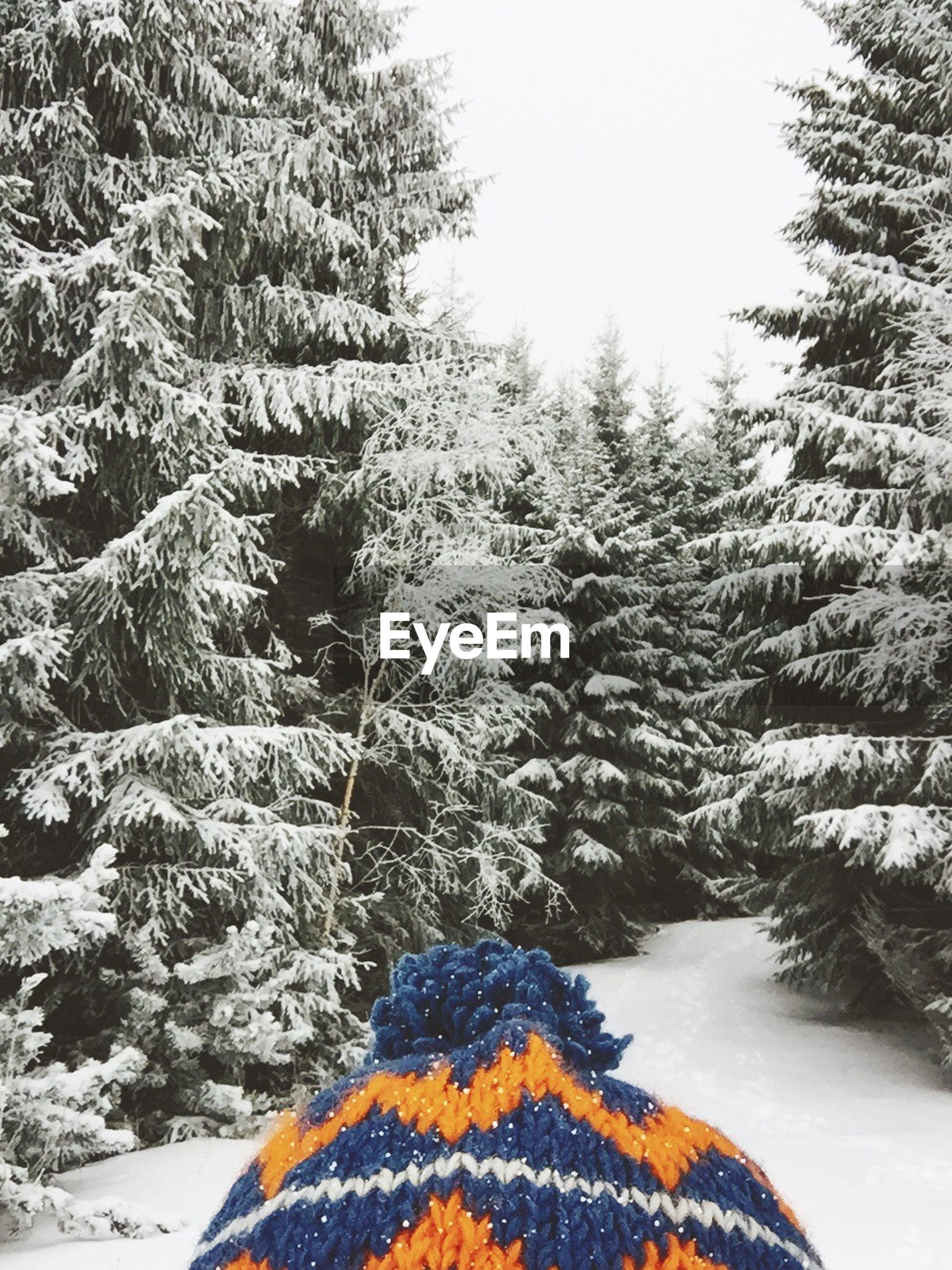 Knit hat against snow covered trees