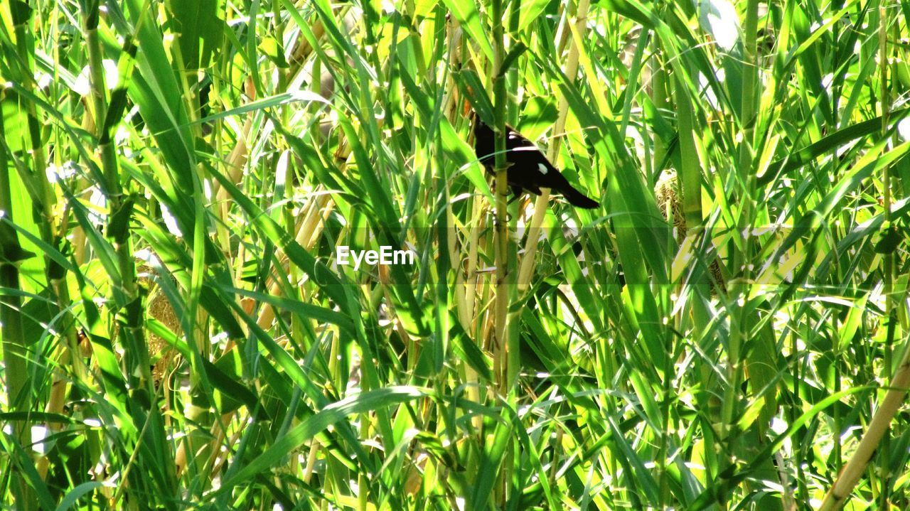 animal, animal themes, plant, one animal, animal wildlife, animals in the wild, vertebrate, green color, bird, growth, no people, nature, day, perching, land, grass, outdoors, field, plant part, leaf