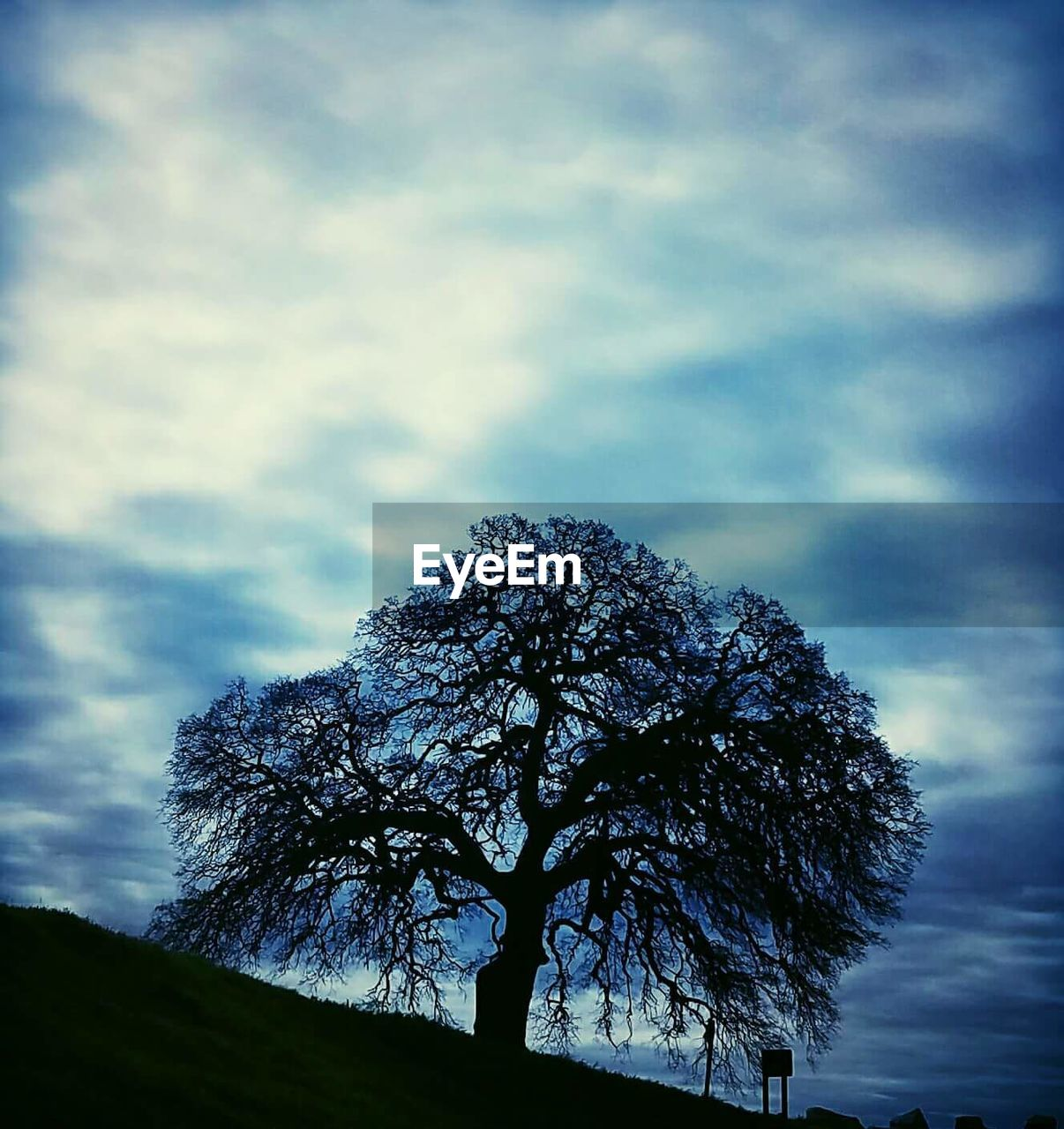 tree, nature, tranquility, sky, low angle view, day, beauty in nature, outdoors, tranquil scene, cloud - sky, silhouette, no people, scenics, landscape, branch, lone, bare tree