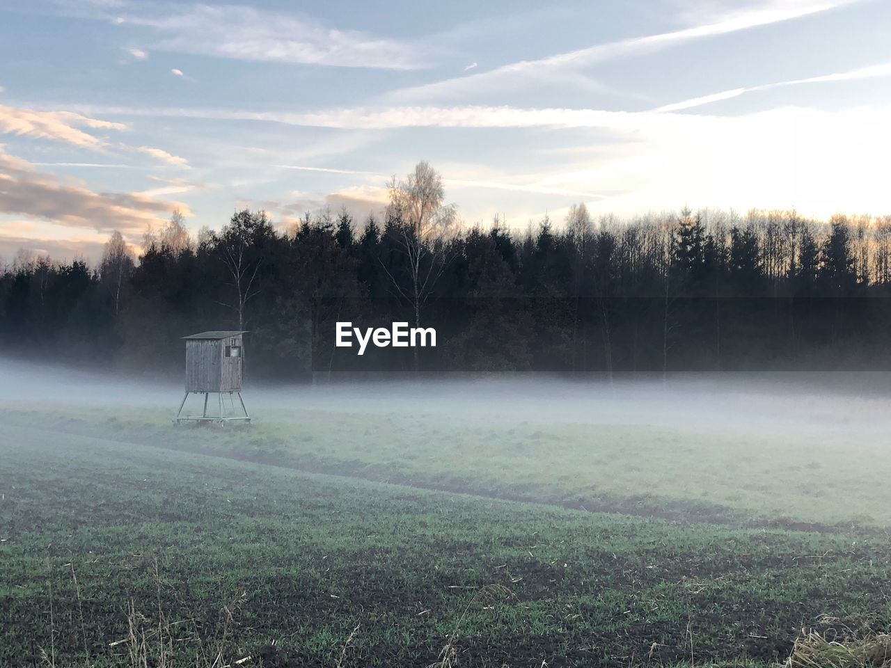 tree, plant, sky, land, landscape, nature, environment, tranquil scene, field, beauty in nature, tranquility, fog, grass, no people, cloud - sky, scenics - nature, growth, non-urban scene, day, outdoors