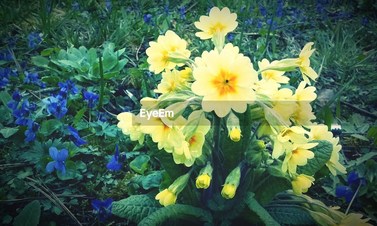 flower, yellow, nature, growth, beauty in nature, freshness, fragility, petal, plant, blooming, flower head, spring, outdoors, no people, close-up, day