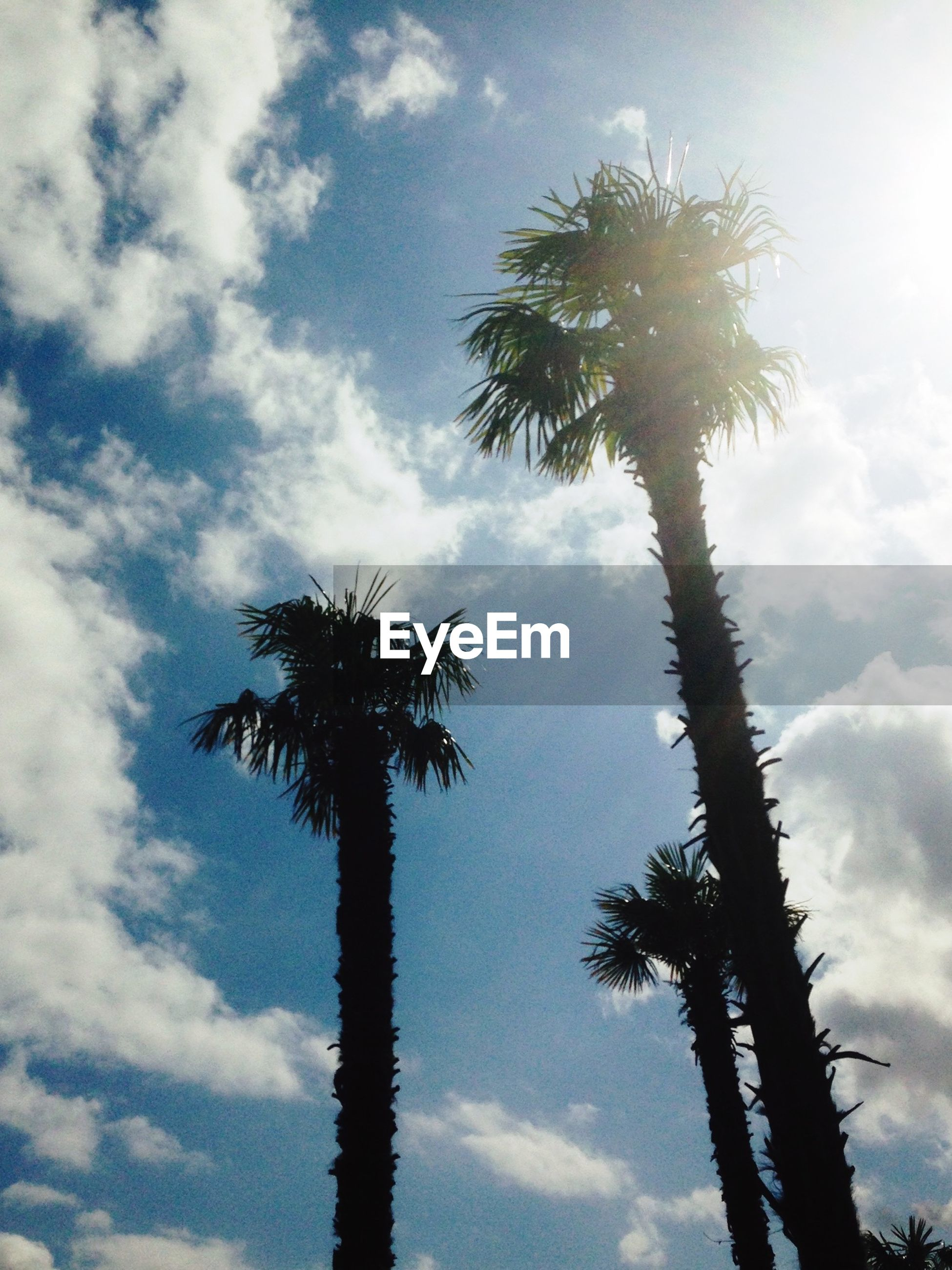 palm tree, low angle view, tree, sky, silhouette, tranquility, tree trunk, growth, nature, beauty in nature, cloud - sky, scenics, tranquil scene, sun, tall - high, sunlight, cloud, coconut palm tree, cloudy, outdoors