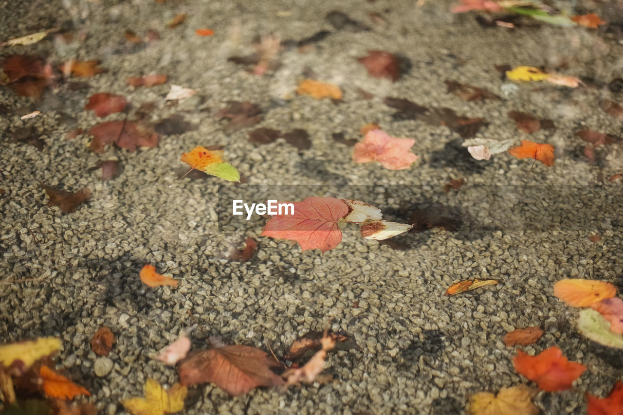 HIGH ANGLE VIEW OF AUTUMN LEAVES ON FALLEN DRY FLOWERS