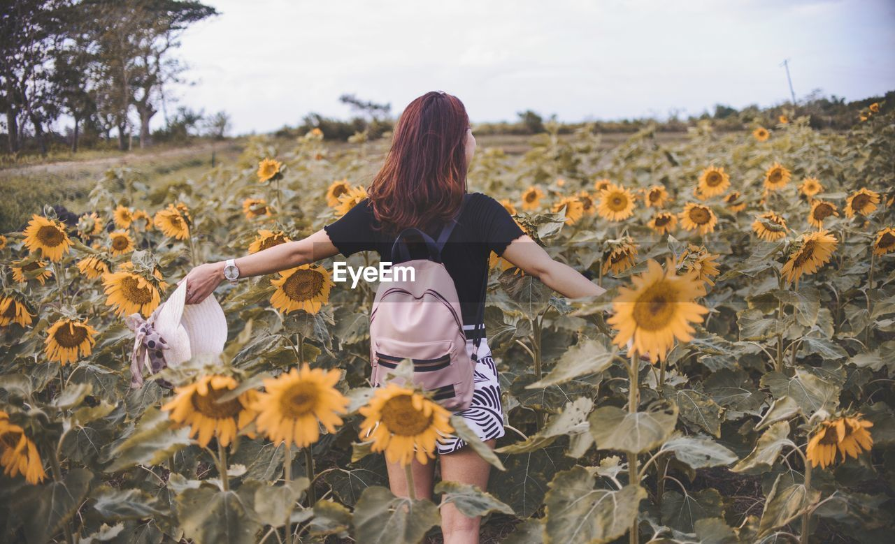 Rear View Of Young Woman With Backpack Standing Amidst Sunflowers On Field Against Sky