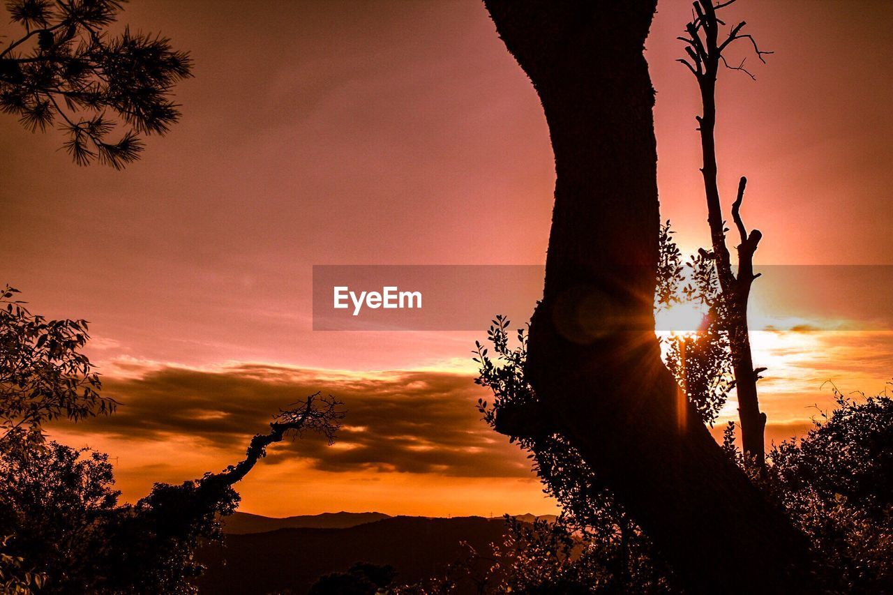 sunset, tree, silhouette, sun, orange color, nature, sky, beauty in nature, scenics, sunlight, tranquil scene, growth, tranquility, outdoors, no people, cloud - sky, tree trunk, mountain, low angle view, landscape, branch, day