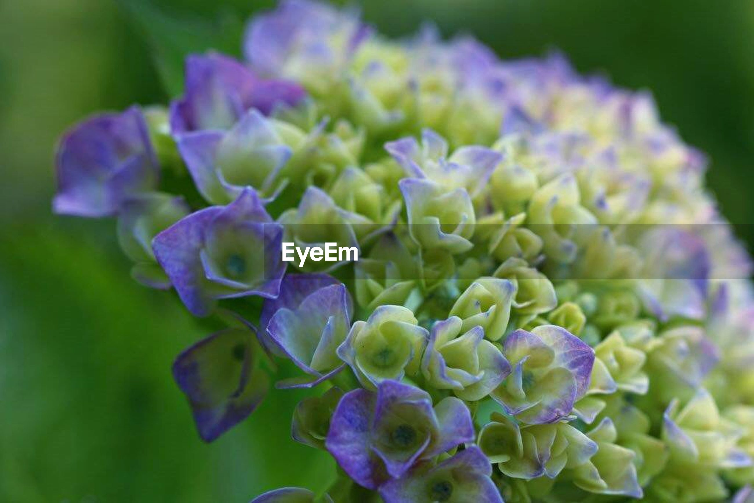 flower, freshness, purple, petal, fragility, flower head, growth, beauty in nature, close-up, focus on foreground, plant, blooming, nature, in bloom, selective focus, blue, blossom, park - man made space, day, springtime