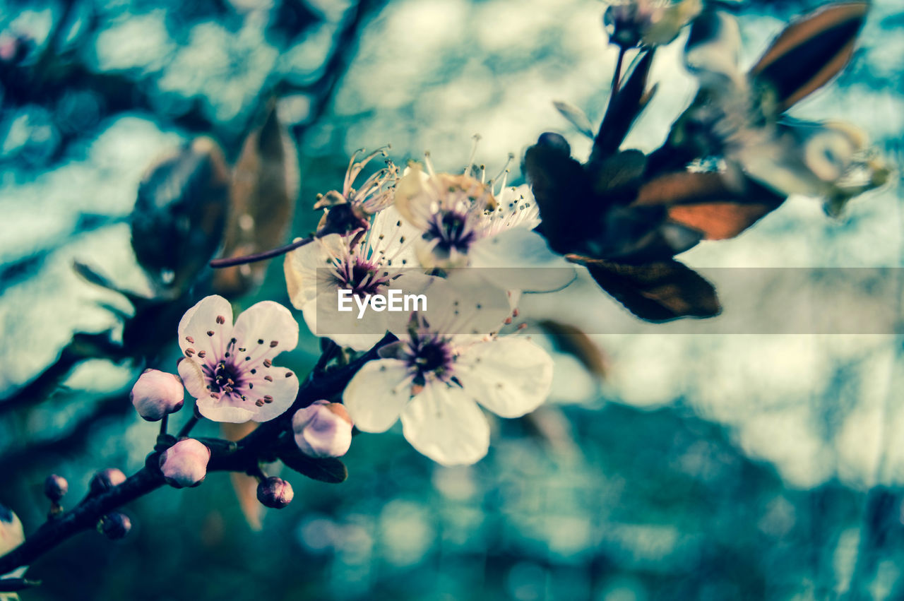 flower, fragility, growth, beauty in nature, nature, blossom, freshness, petal, tree, springtime, no people, flower head, outdoors, day, branch, selective focus, plant, close-up, stamen, plum blossom, blooming, animal themes
