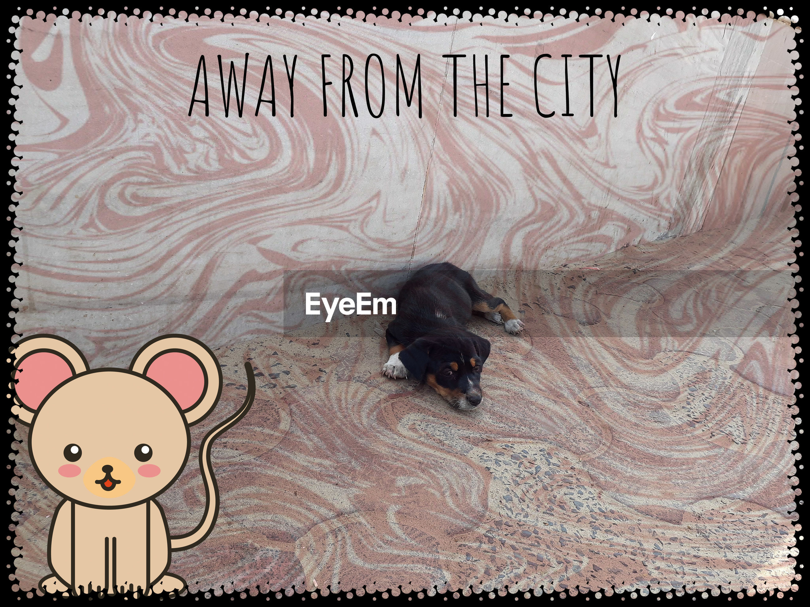 HIGH ANGLE VIEW OF A DOG IN THE TEXT