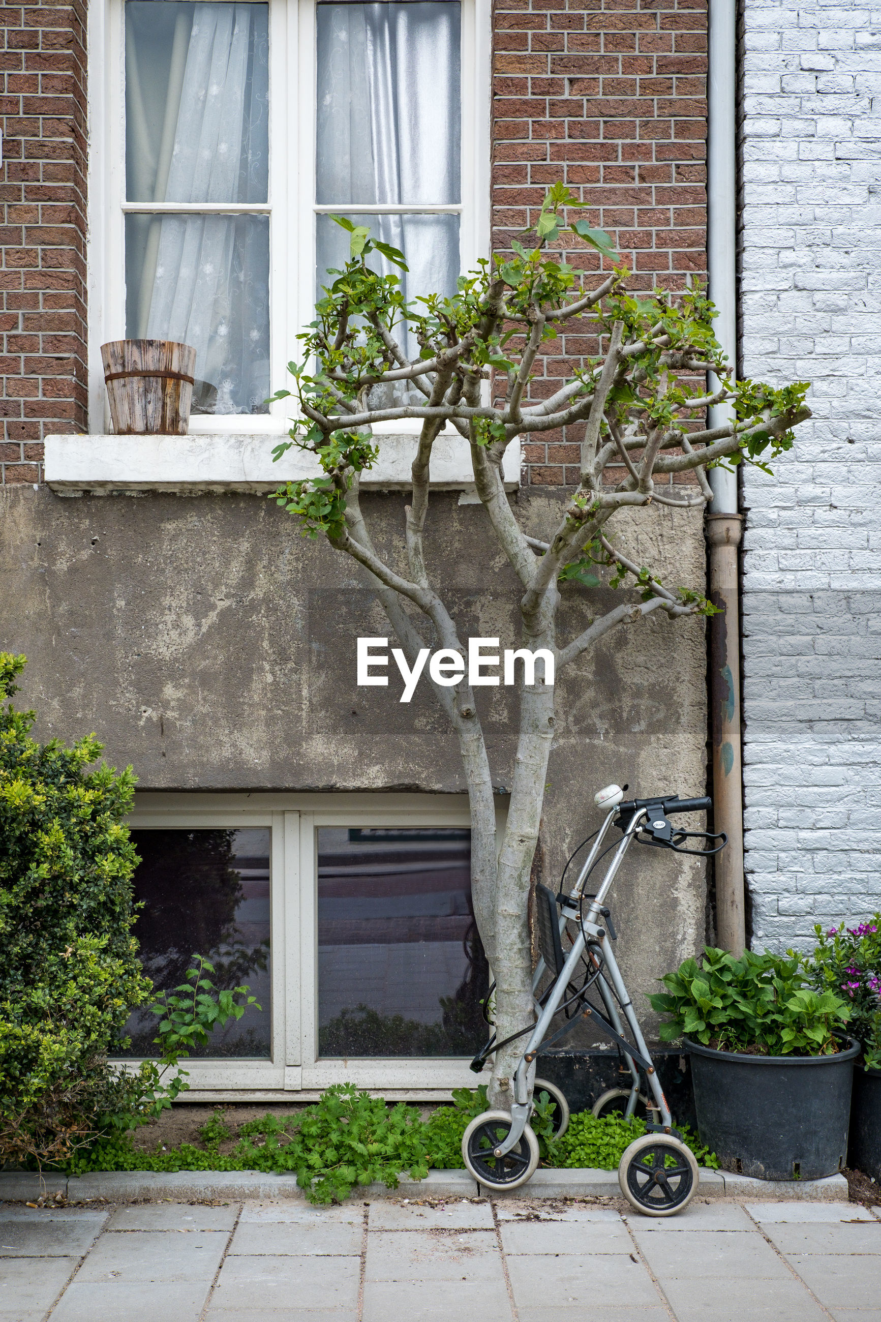 building exterior, architecture, building, built structure, plant, window, house, residential district, growth, no people, day, potted plant, nature, city, brick, outdoors, entrance, facade, tree, door, gardening, houseplant, flower pot