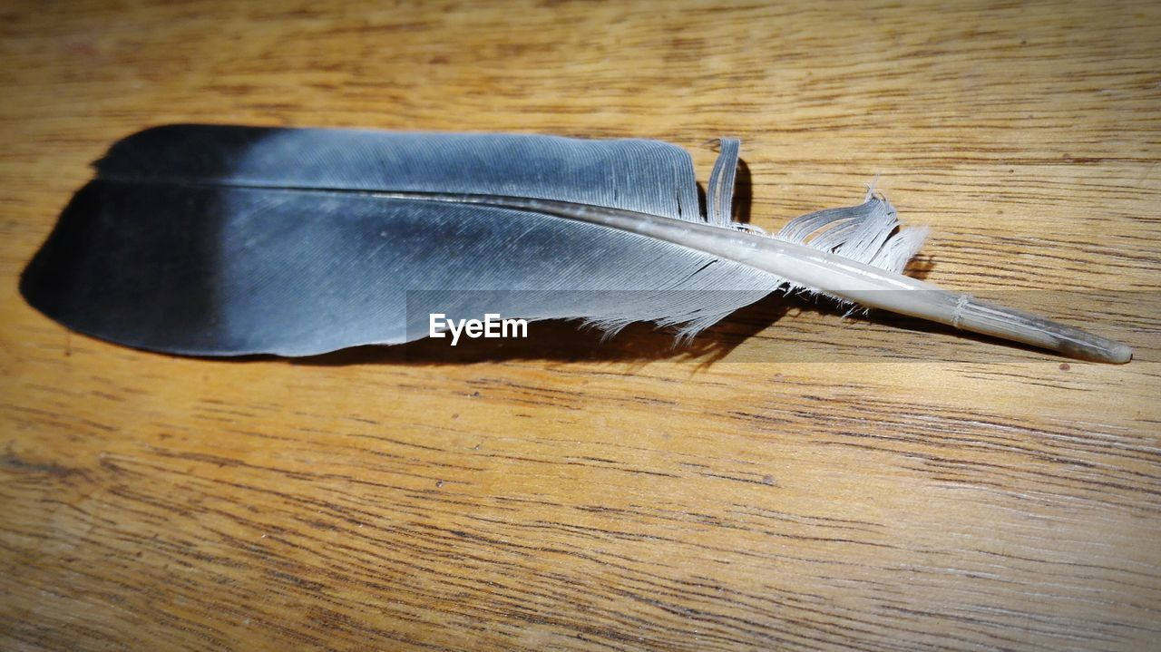 Close-up of feather on wooden table