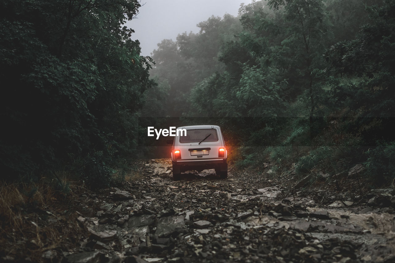 Off-Road Vehicle Amidst Trees In Forest