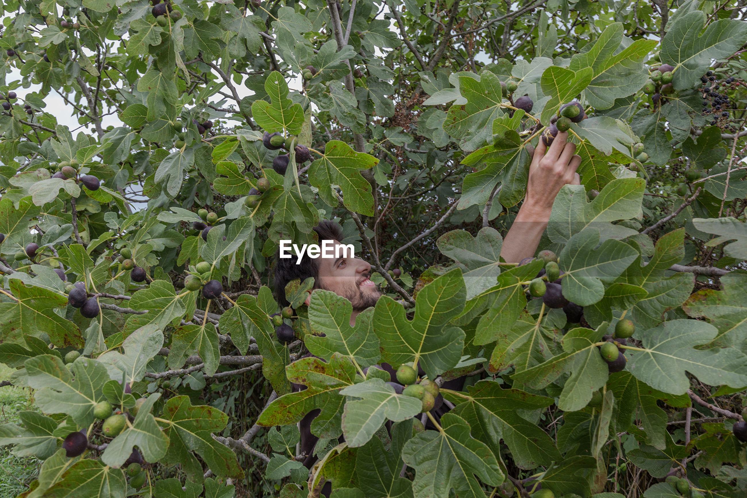 PLANTS ON TREE