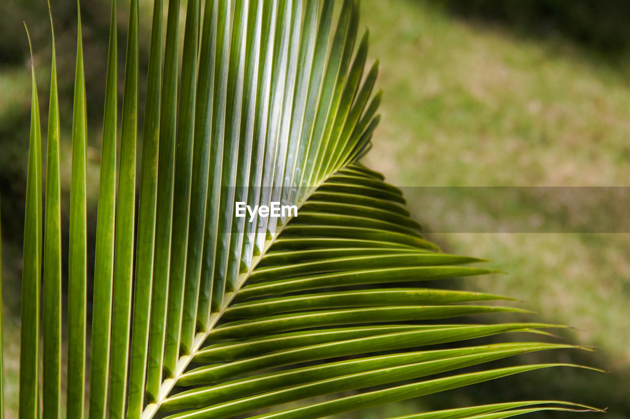 leaf, palm tree, green color, growth, palm leaf, plant part, plant, beauty in nature, tropical climate, close-up, frond, nature, no people, tree, focus on foreground, day, natural pattern, pattern, outdoors, freshness, leaves, rainforest