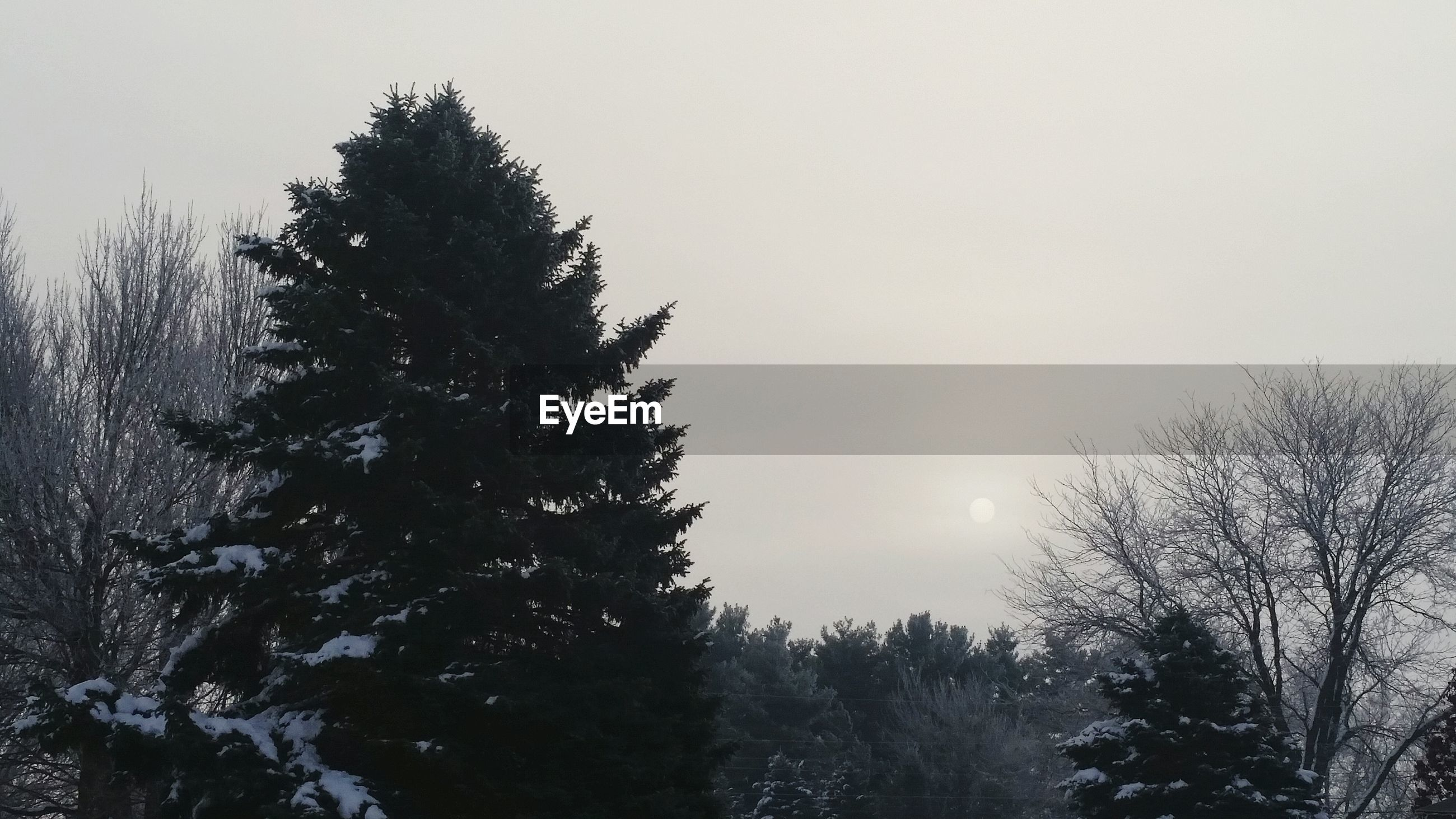 Trees with snow against sky during winter