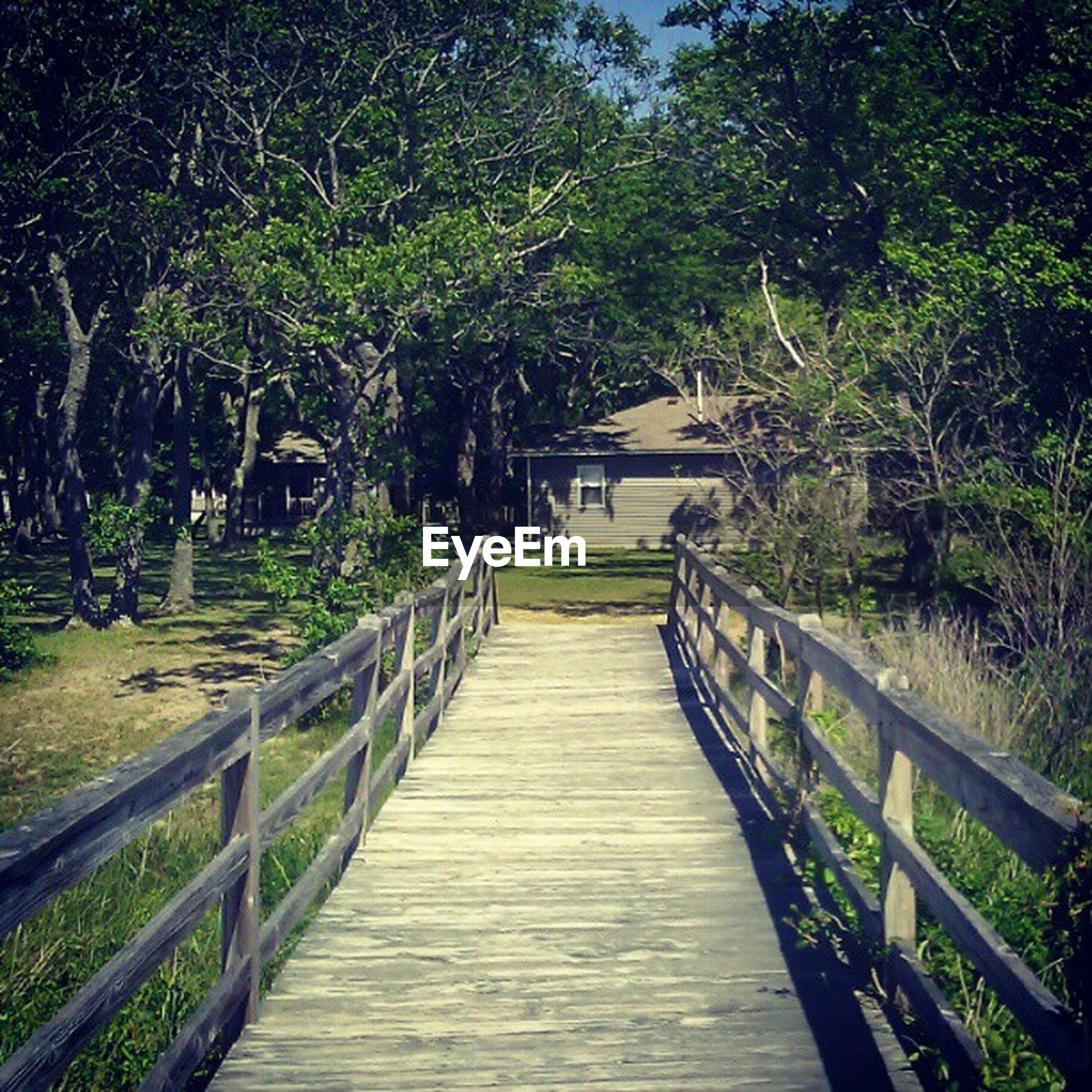 the way forward, tree, tranquility, diminishing perspective, railing, walkway, boardwalk, growth, nature, tranquil scene, narrow, vanishing point, wood - material, footbridge, pathway, footpath, green color, beauty in nature, long, empty