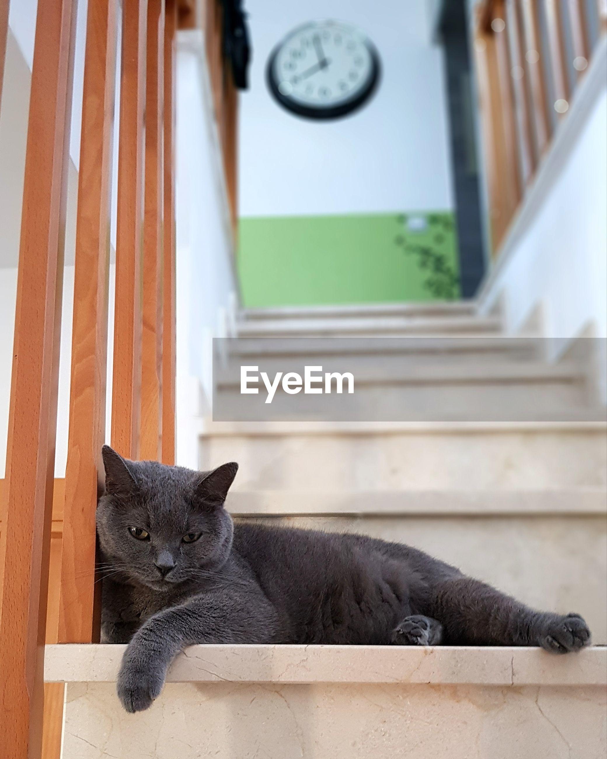 PORTRAIT OF CAT RESTING ON FLOOR