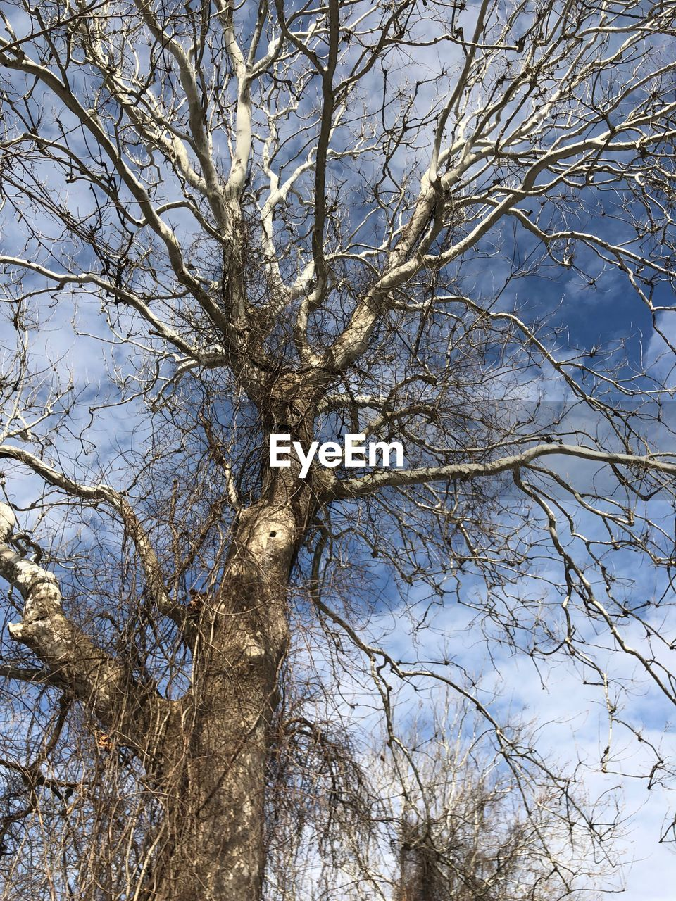 tree, branch, low angle view, bare tree, nature, day, beauty in nature, tranquility, tree trunk, outdoors, no people, sky