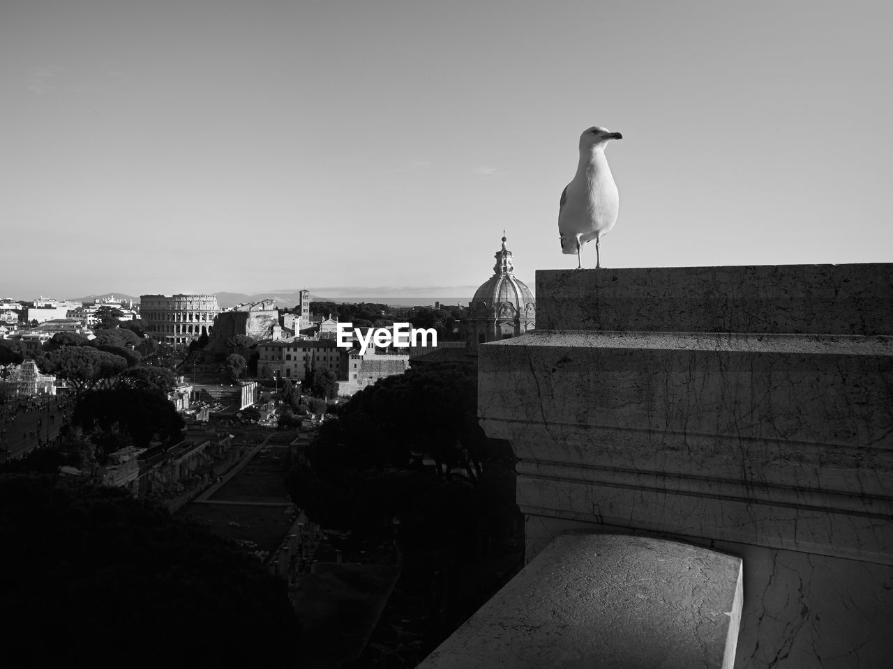Seagull on statue against buildings in city against clear sky
