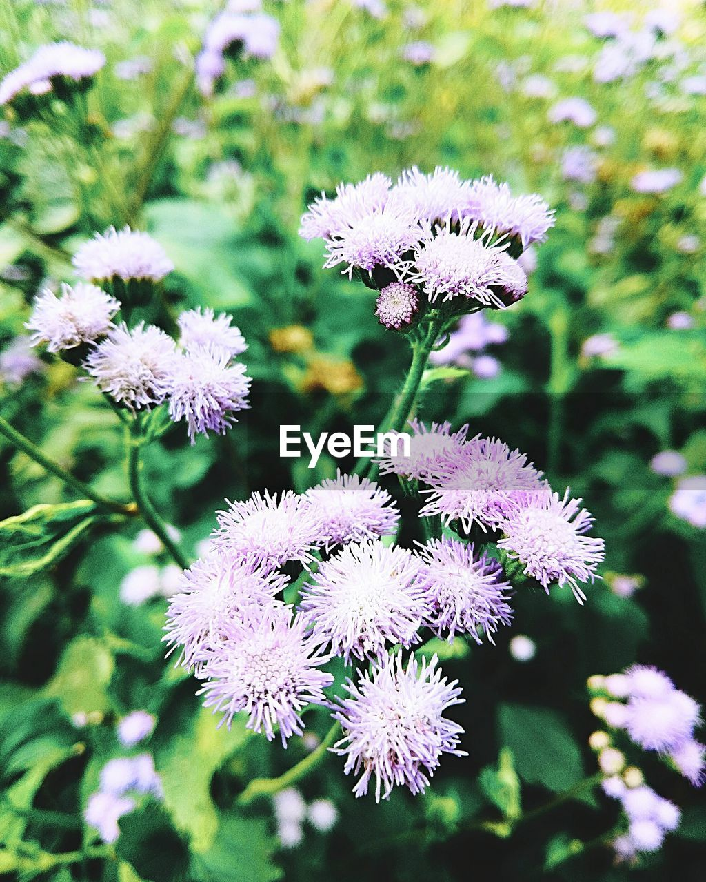 flower, nature, beauty in nature, growth, fragility, plant, flower head, focus on foreground, purple, petal, no people, freshness, day, spring, outdoors, blooming, close-up