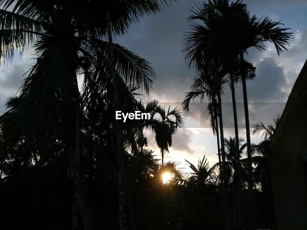 sky, tree, plant, silhouette, sunset, beauty in nature, palm tree, growth, tropical climate, tranquility, tranquil scene, nature, scenics - nature, no people, cloud - sky, sunlight, low angle view, sun, tree trunk, trunk, outdoors, lens flare, coconut palm tree