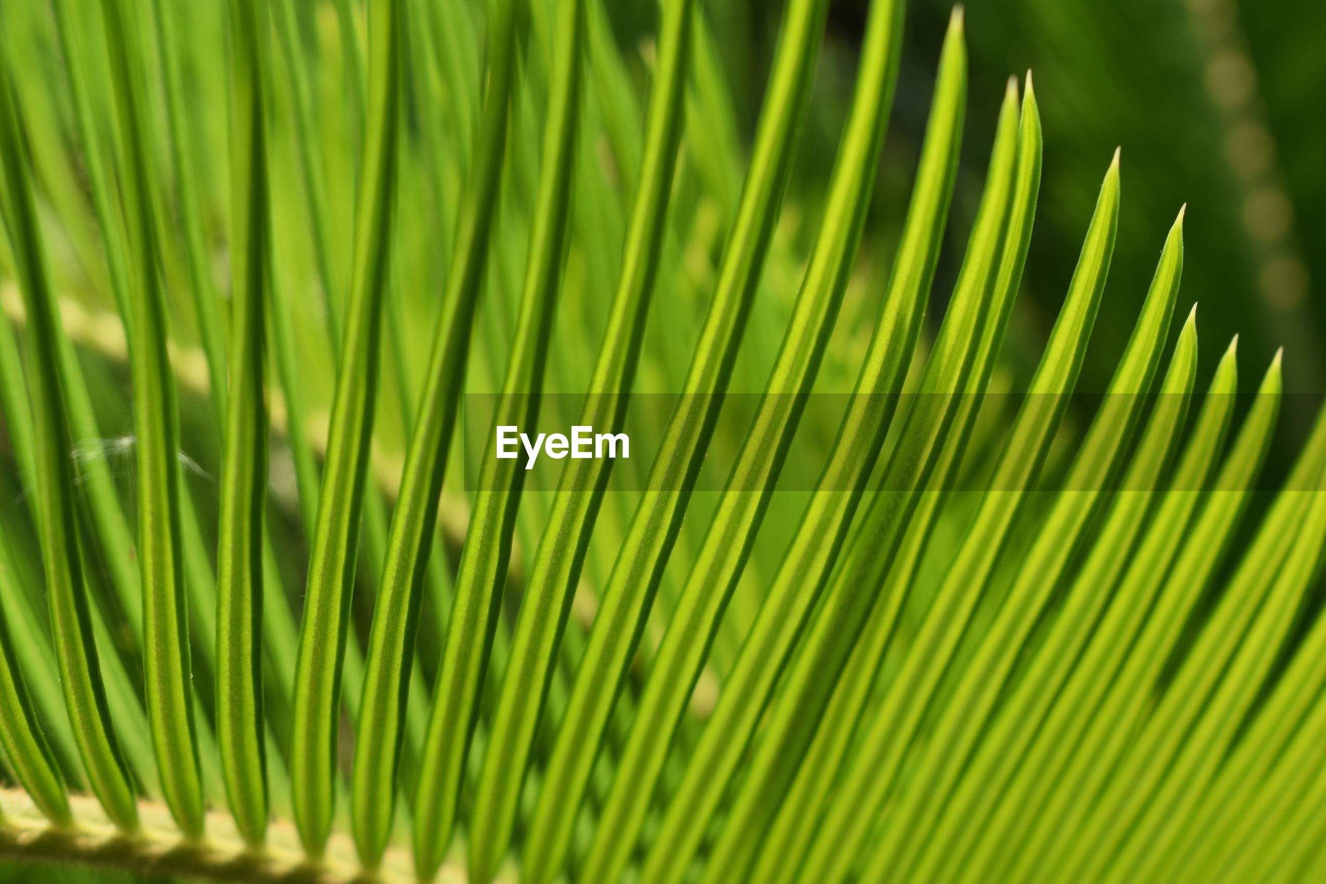 CLOSE-UP OF PALM TREE LEAVES IN BACKGROUND