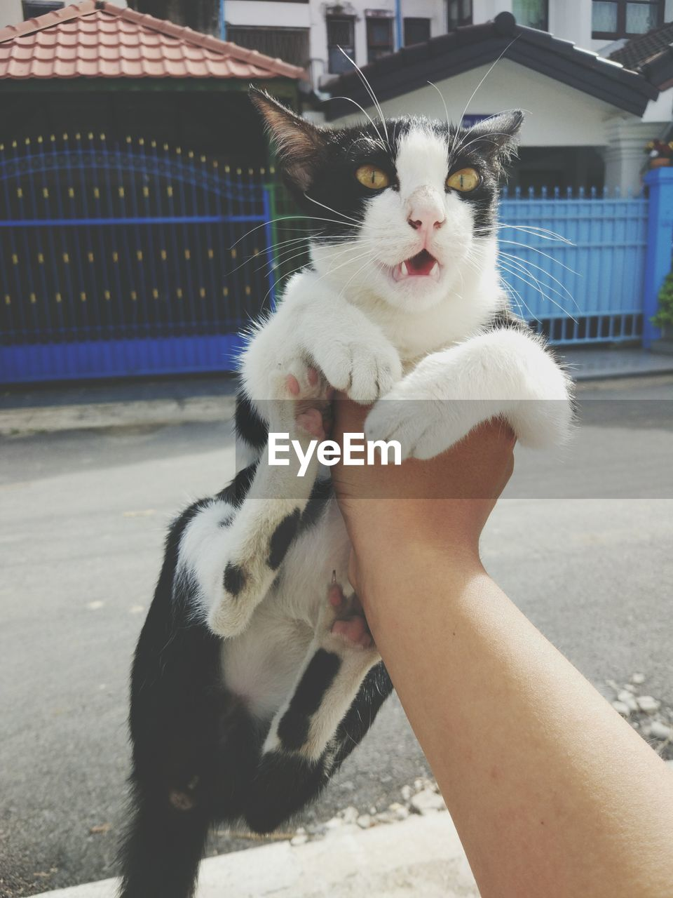 Cropped Image Of Hand Holding Cat On Street