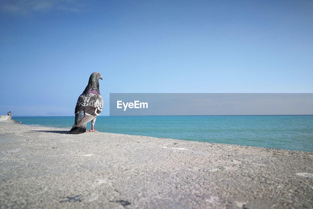 VIEW OF BIRD ON BEACH AGAINST CLEAR SKY