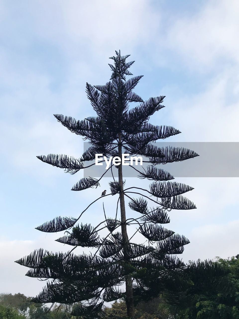 tree, sky, palm tree, cloud - sky, low angle view, growth, outdoors, day, nature, no people, green color, beauty in nature, close-up