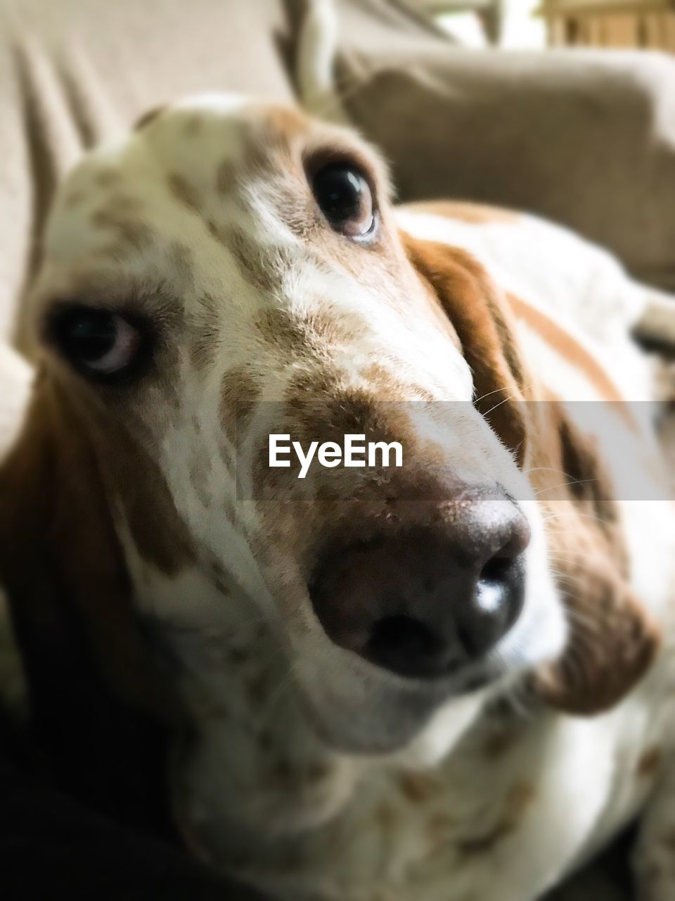 dog, one animal, domestic animals, animal themes, pets, animal head, mammal, close-up, no people, portrait, looking at camera, indoors, day