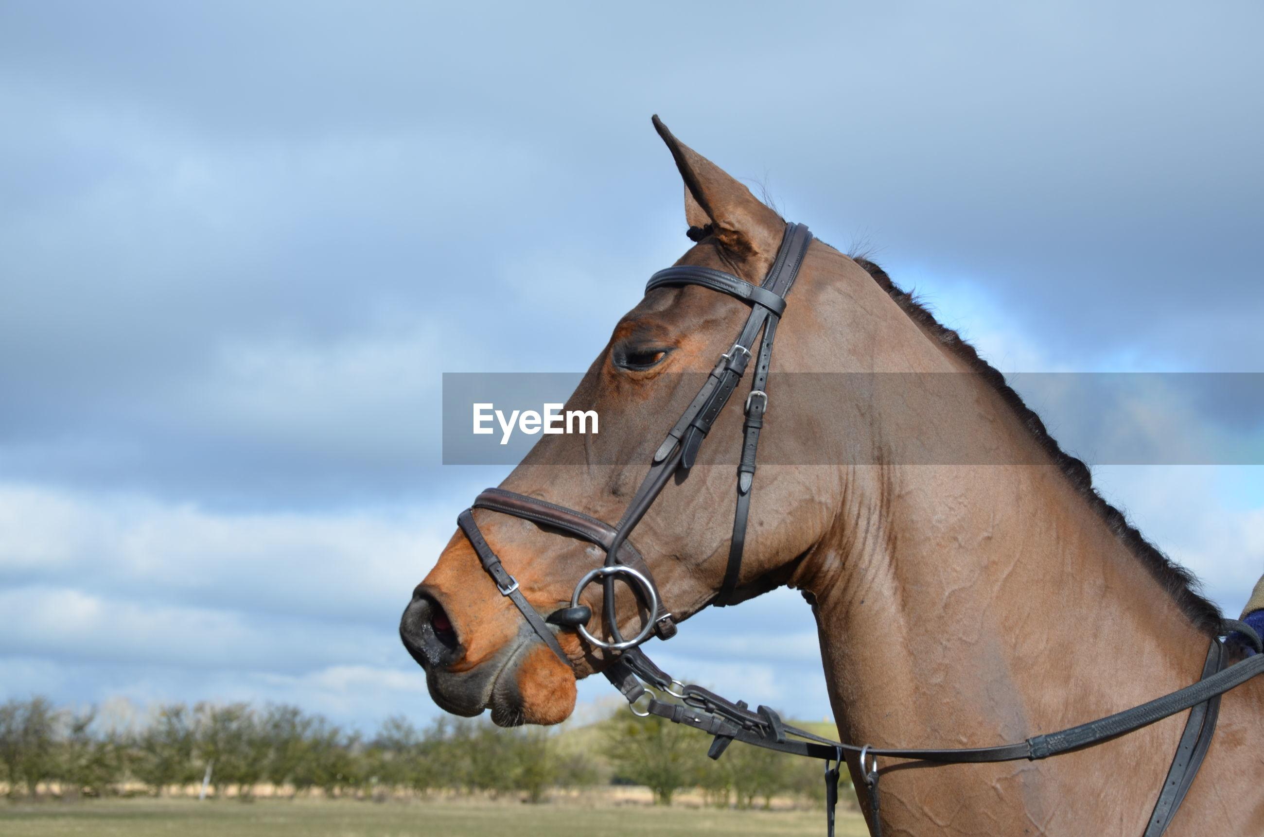 Horse against cloudy sky