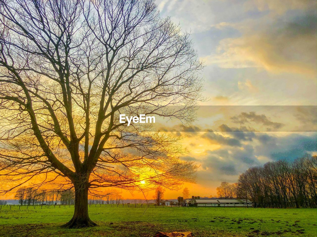 tree, sky, scenics - nature, beauty in nature, plant, sunset, cloud - sky, tranquil scene, landscape, tranquility, environment, field, bare tree, nature, land, no people, orange color, non-urban scene, grass, branch, outdoors